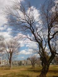 本町公園、日差しあり☆17-3-16