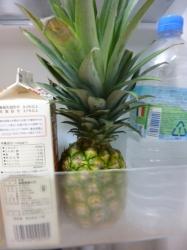 パイナップル、冷蔵庫内☆17-8-3