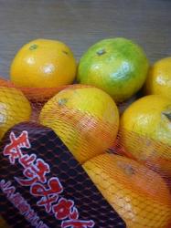長崎みかん、まだ緑☆17-10-20