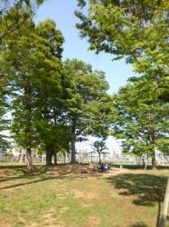 本町公園、木立のベンチ☆18-4-20