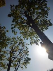本町公園、木漏れ日☆18-4-20