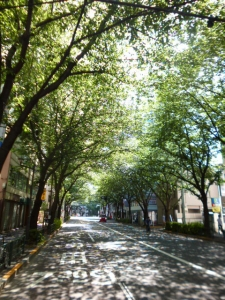 葉桜の木漏れ日☆18-4-30