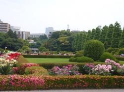 新宿御苑バラ園、フランス式庭園バラ花壇☆18-5-17