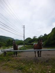 ミノワ乗馬クラブ、入口馬場☆18-6-5