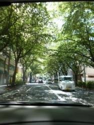 梅雨の晴れ間、桜の木漏れ日☆18-6-7