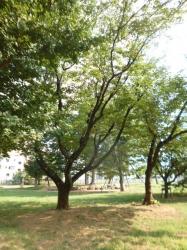 本町公園、朝の木立☆18-7-22