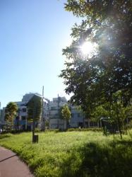 秋の兆し木漏れ日、本町公園☆18-8-17