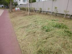 本町公園、草刈りの草☆18-9-6