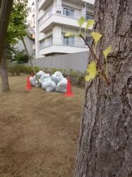 本町公園、回収袋とイチョウの葉☆18-9-6