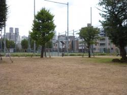 本町公園、鳥たちのランチタイム終了☆18-9-11
