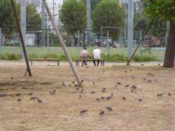 本町公園、鳥たちのランチタイム、ベンチ前☆18-9-11