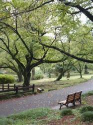 新宿御苑、下の池前のベンチ☆18-9-15