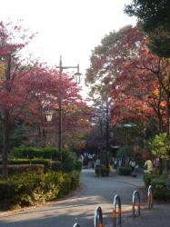 紅葉並木、蚕の森公園脇☆18-11-11