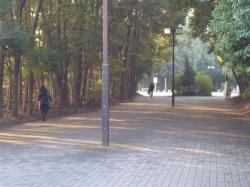 横浜国大、メインストリート☆18-12-7