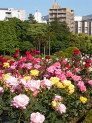 新宿御苑バラ園、カラフル☆19-5-17