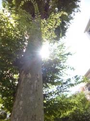 太陽の日差し、本町公園☆19-7-8