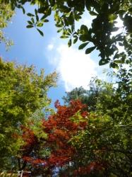 小仏城山、木々の葉と青空☆19-8-8