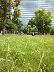 中野セントラルパーク、芝生☆20-6-2
