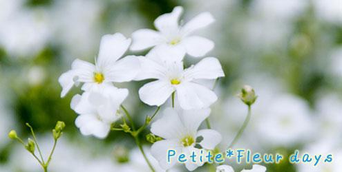 petit*fleurな日々