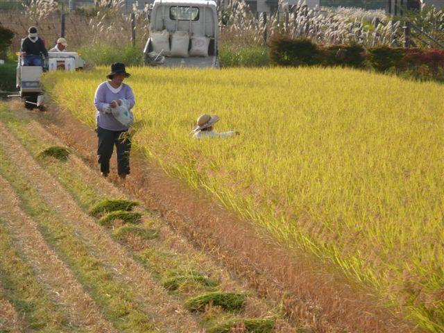 富士吉田田園風景4