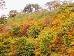 台温泉の紅葉