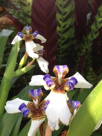 夢の島熱帯植物園