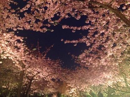 いつかの夜桜♪
