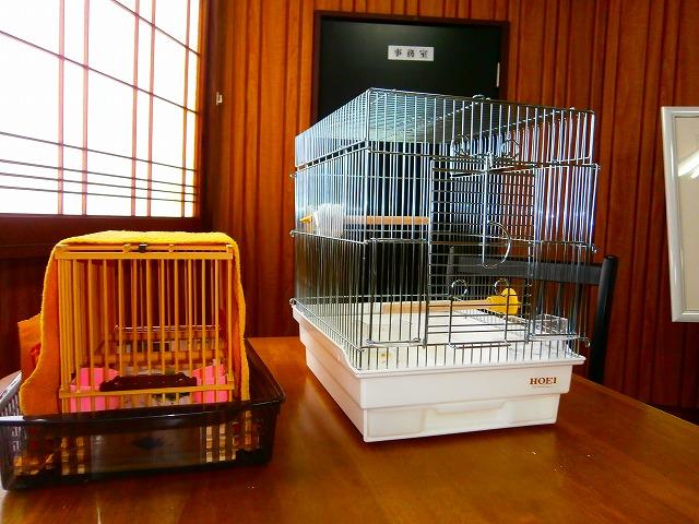ぶんちょう不動産社鳥室