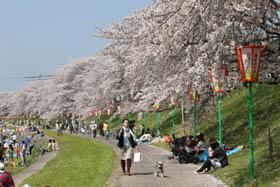 2012お花見