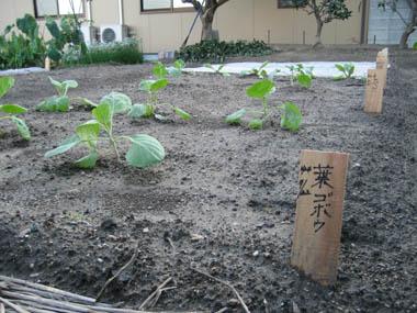畑・2012