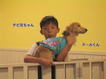 doginc.5