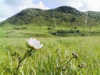 野に咲く〜