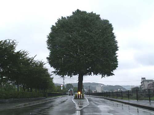 十月はじめの日 雨