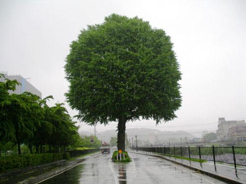 けだるい雨