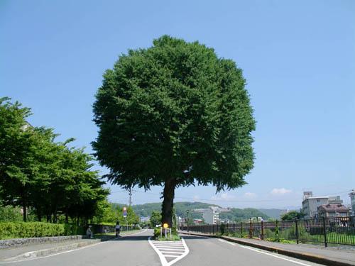 今日も暑い・・広島「原爆の日」