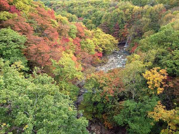 松川の紅葉