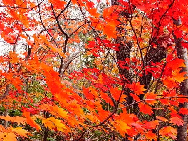大きな秋見つけた