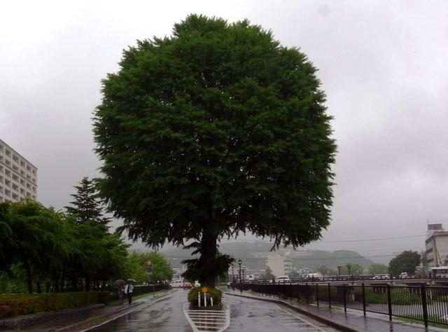 梅雨入り-024blog.jpg