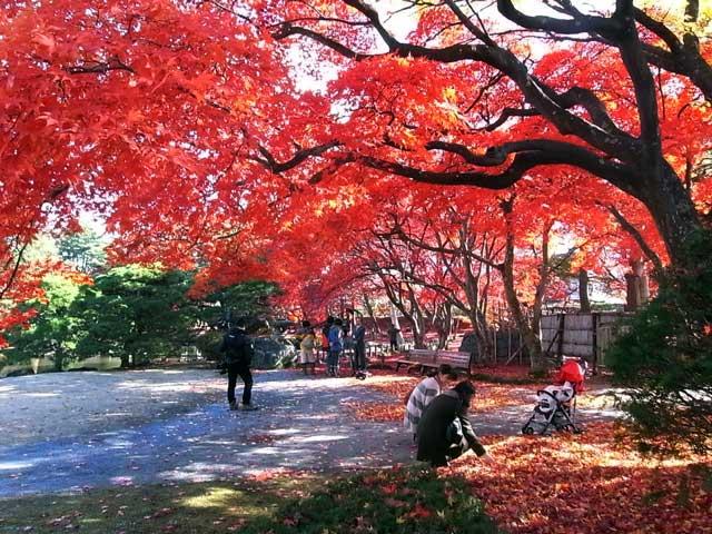 まだまだ秋色