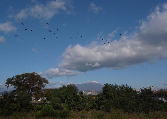 岩手山とヒヨドリ