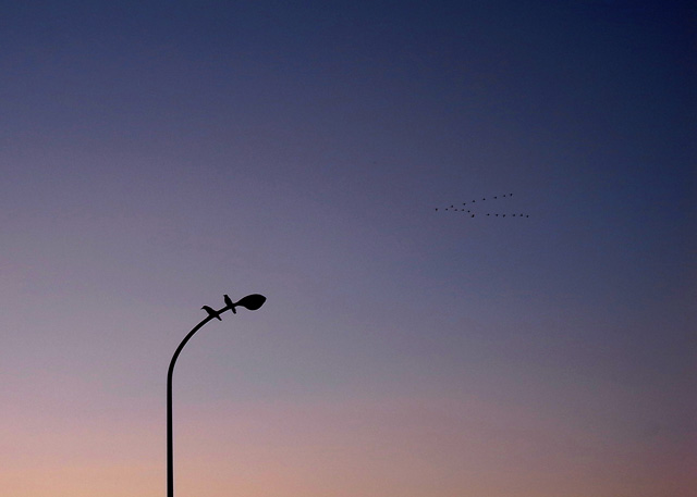 雁or白鳥