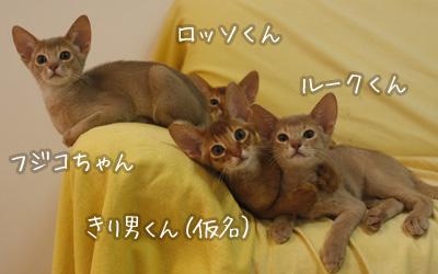 blog1496.jpg