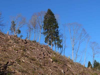 飛騨高山視察3.JPG
