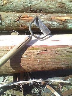 杉丸太の皮剥き
