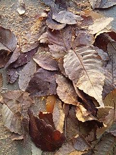 落ち葉と木屑