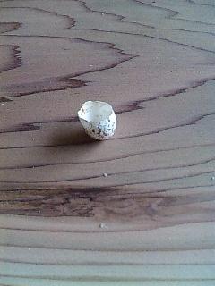 ツバメの卵の殻