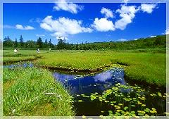 <神仙沼ハイキング>宿から車で25分程、ニセコ連峰に点在する湖沼群の中でもひときわ美しい景観を誇るとその周辺の湿原をハイキング、木道が整備されていて歩きやすいので、小さな子供連れから年配の方まで安心して楽しめます。片道/徒歩約20分