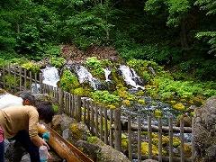 <京極ふきだし公園>湧水は、羊蹄山に降った雨や雪が数十年の歳月をかけて地下に浸透し、京極のこの地に湧き出した湧水です。