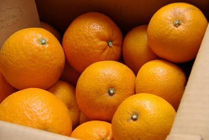 はっさく&清見オレンジ