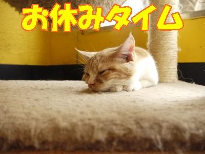 ネコの睡眠時間